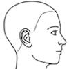 顔面(右側面)