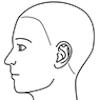 顔面(左側面)